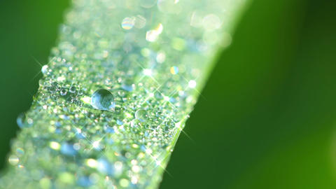 Morning Dew on the Grass. Seamless Looped Footage