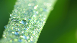 Morning Dew on the Grass. Seamless Looped Stock Video Footage