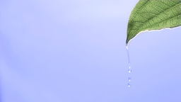 Drops of water in super slow motion falling from a Stock Video Footage