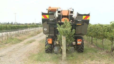 behind grape harvester Stock Video Footage