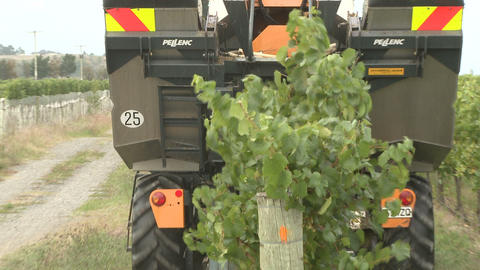 Behind Grape Harvester stock footage