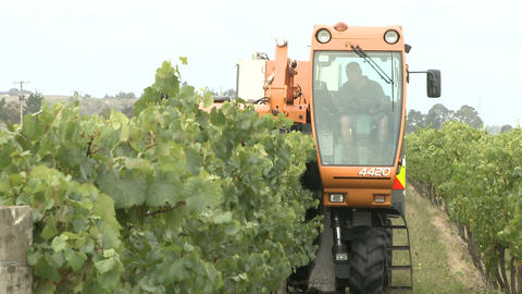 front grape harvester Stock Video Footage