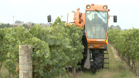 front grape harvester Footage