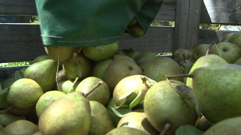 pears placed into a bin pov Footage