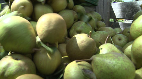 pears placed into a bin pov Stock Video Footage