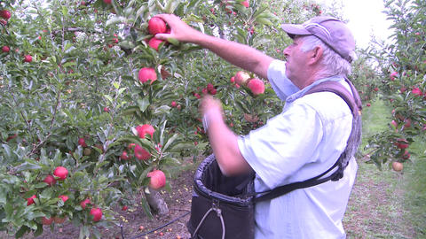 picking apples Stock Video Footage