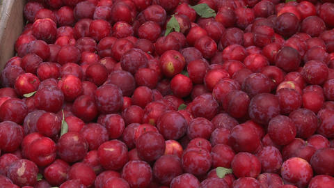 plums in a bin Stock Video Footage