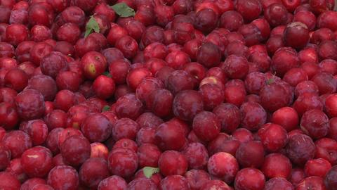 plums in a bin Stock Video Footage