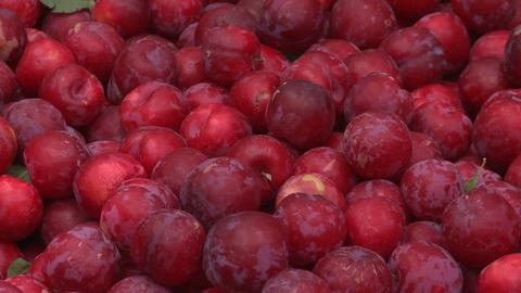 plums in bin zoom out Stock Video Footage