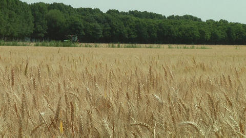 Wheat and tractor Stock Video Footage