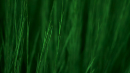 Green Grass Waving Stock Video Footage