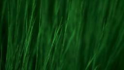 Green Grass Waving Stock Video Footage