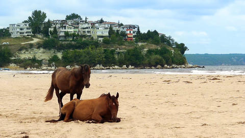 Pair of horses on beach Stock Video Footage