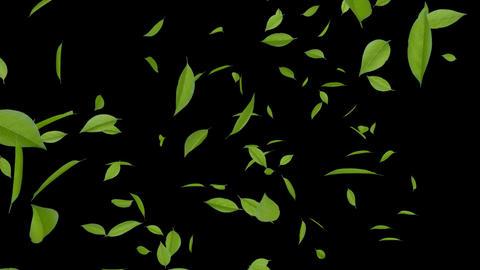 Leaf A3 HD Stock Video Footage