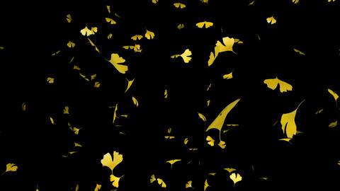 Leaf B1 HD Stock Video Footage