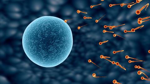 spermatozoa 03 Animation
