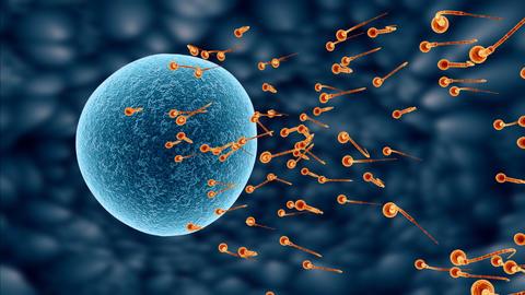 spermatozoa 03 Stock Video Footage