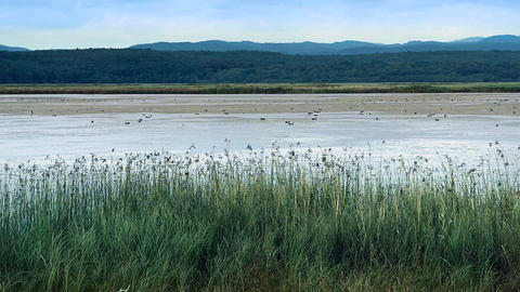 Reeds on tranquil lake bed during day Stock Video Footage