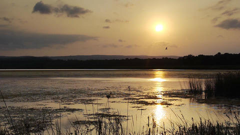 Reeds on lake bed at sunset Stock Video Footage