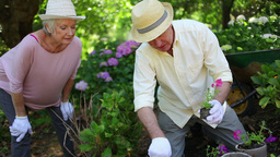 Retired couple gardening together Stock Video Footage