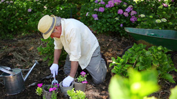 Retired Man Gardening stock footage