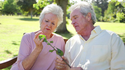 Mature couple holding a rose Footage