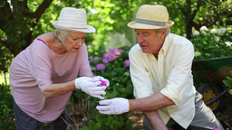 Mature couple gardening together Footage