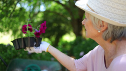 Mature woman speaking to a man is holding flowers Footage