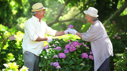 Mature couple cutting flowers Footage
