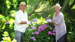 Mature couple cutting flowers Stock Video Footage