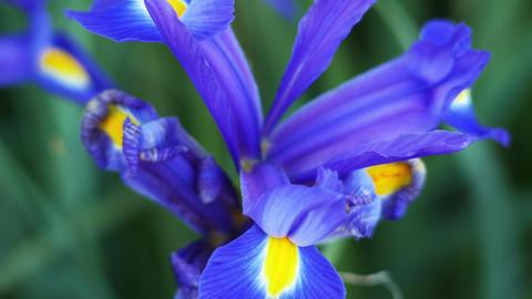 1782 Purple Flower, 4K Footage