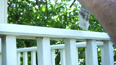 1787 Man Paint Brushing Wooden Deck White, 4K Stock Video Footage