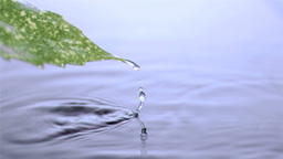 Leaf emerging in super slow motion from water Stock Video Footage