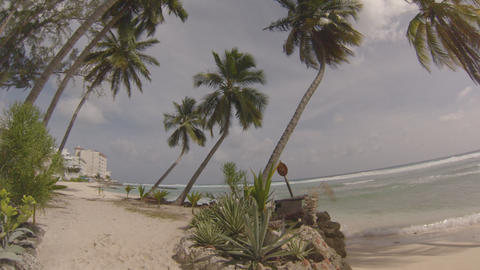 palm trees on the beach bus stop Stock Video Footage
