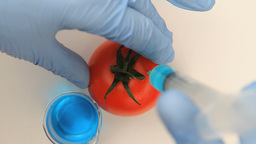 Syringe injecting a blue product in a tomato Footage