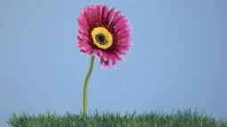 Beautiful flower in super slow motion receiving wa Stock Video Footage