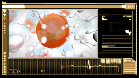 Digital interface showing egg cell fertilization Animation