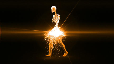 Skeleton appears and becomes fully formed human Animation