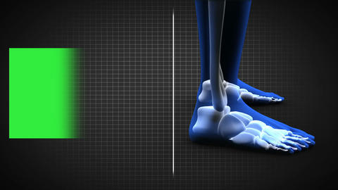 Full human body scan showing skeleton wth copy spa Animation