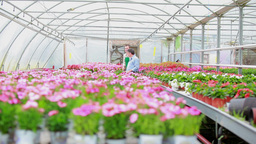 Employee and customer walking through greenhouse Footage