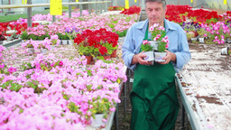 Gardener carrying plants Stock Video Footage