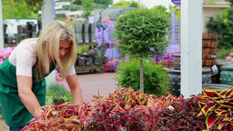Woman working at the garden center Footage