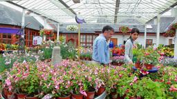 Assistant showing couple plants Footage
