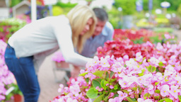 Couple looking at flowers Footage