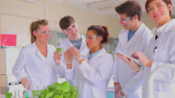 Students doing plant research in the lab Stock Video Footage