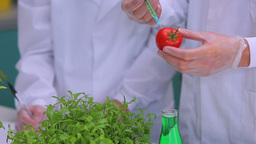 Students injecting tomato in the laboratory Footage