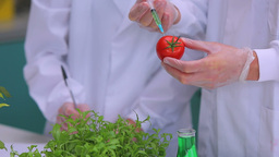 Students injecting tomato in the laboratory Stock Video Footage