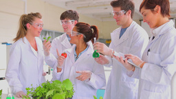 Biology students with plants a tomato and a tablet Footage