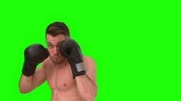 Concentrated man boxing on green background Footage