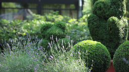 topiary of the garden Footage